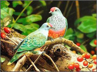 daldaki iki kuş